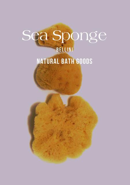 sea-sponge.jpg
